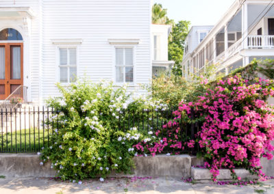 Bougainvilleia on Broad