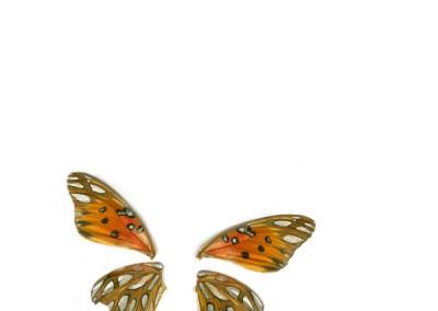 Butterflew