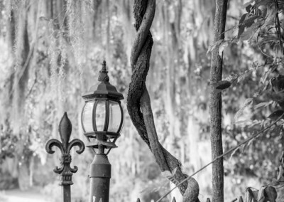 Charleston Lamp Post and Moss