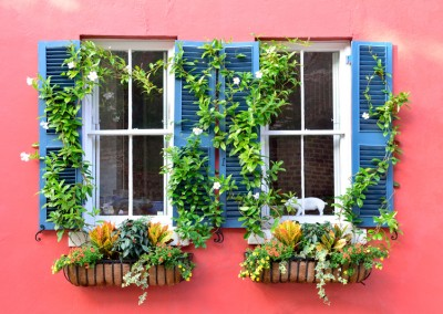 Charleston Windows