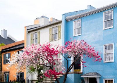 Fulton Street Blooms