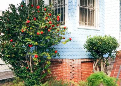 Roses on Rutledge