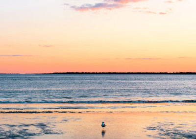 Seagull and Sullivan's Sunset Steven Hyatt