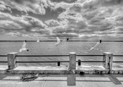 Seagulls at Charleston Battery