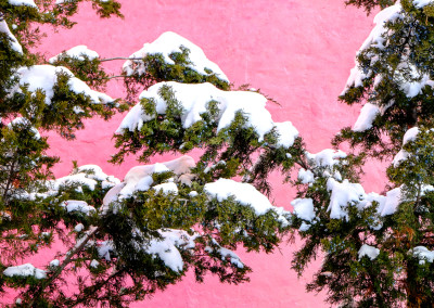 Pink Wall and Snow